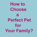 Four Essential Tips to Choose a Perfect Pet for Your Family!