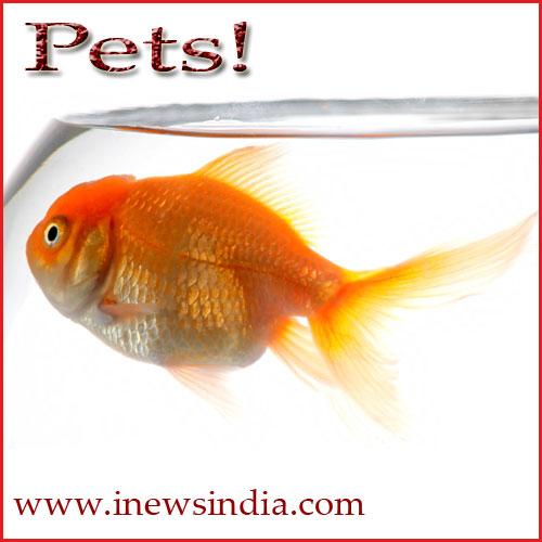 Adopt Pets!